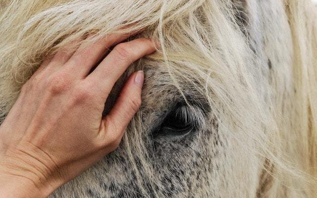 Blogga om hästar